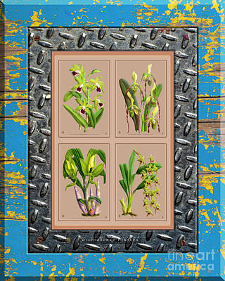 Pop Art - Orchids Antique Quatro Weathered Plank Rusty Metal by Baptiste Posters