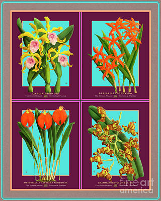 Mixed Media Royalty Free Images - Collage Vintage Orchids Quatro Royalty-Free Image by Baptiste Posters