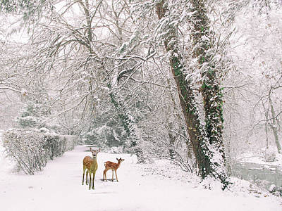 Photograph - Winter Wonders by Jessica Jenney