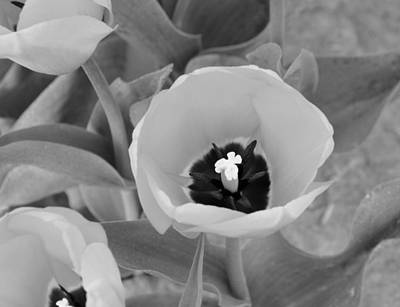Claude Monet - Flowers Black and White collection by Helen Wade