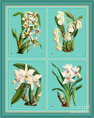Shark Art - Orchids Quatro Collage by Baptiste Posters