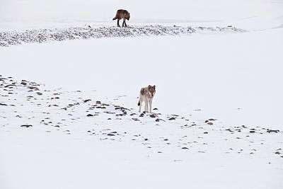 Photograph - 812 Lone Wolf by Eilish Palmer