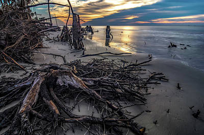 Photograph - Beautiful Nature On Hunting Island South Carolina by Alex Grichenko