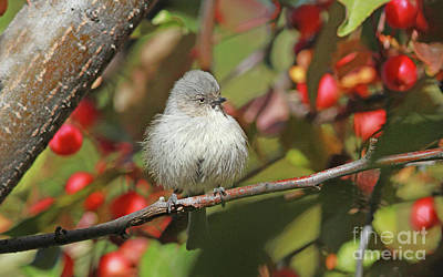 Wall Art - Photograph - Bushtit by Gary Wing