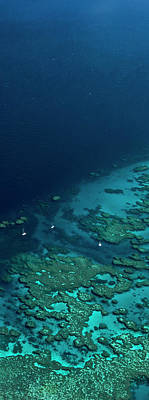 Photograph - Great Barrier Reef by Andrew Watson