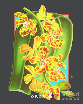 Beach House Signs - Vintage Orchid Exotic Flower Plant by Baptiste Posters