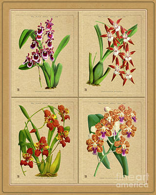 Personalized Name License Plates - Orchids Quatro Classic Collage by Baptiste Posters
