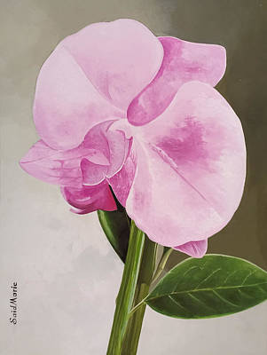 Painting - A Beautiful Rose by Said Marie