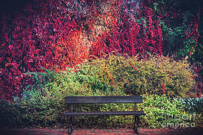 Photograph - A Bench And Colorful Autumn Foliage On A Wall. by Michal Bednarek