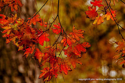Photograph - A Branch Of Autumn by John Harding