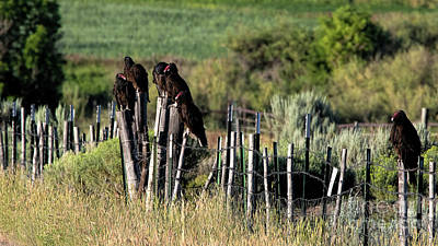 Photograph - A Bunch Of Buzzards by Jim Garrison