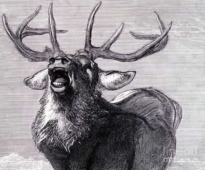 Drawing - A Challenge, 1845  by Edwin Landseer
