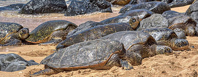 Photograph - A Couple Of Turtles Stopped By by Jim Thompson