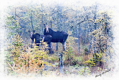 Digital Art - A Cow Moose And Her Calf. by Rusty R Smith
