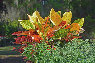 Photograph - A Crown Of Colorful Leaves by Bruce Gourley