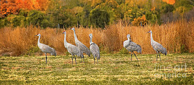 Photograph - A Dance Of Cranes by Susan Warren