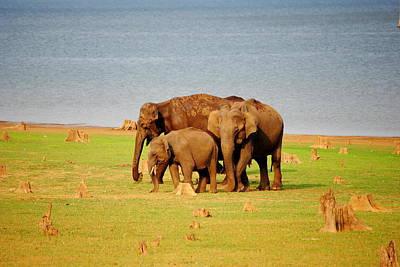 Karnataka Photograph - A Family Of Asiatic Elephants by Mayank Pandey Fotografi'