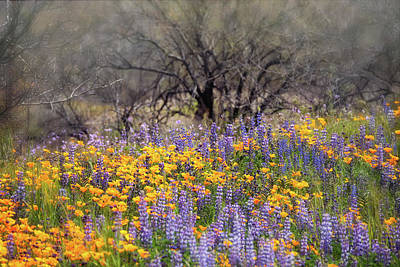 Photograph - A Field Of Spring Wildflowers  by Saija Lehtonen