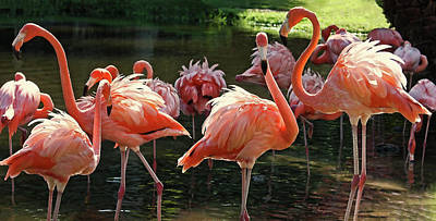 Photograph - A Flamboyance Of Tropical Flamingos by HH Photography of Florida