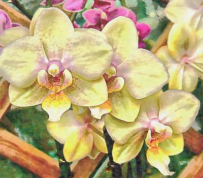 Photograph - A Flash Of Orchids by Dorothy Berry-Lound