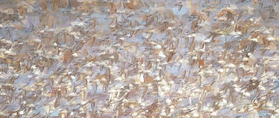 Photograph - A Fling Of Sandpipers by Tracy Munson