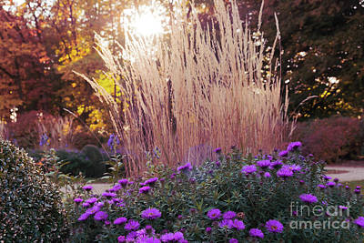 A Flower Bed In The Autumn Park Art Print