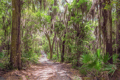 Photograph - A Forest Trail by John M Bailey