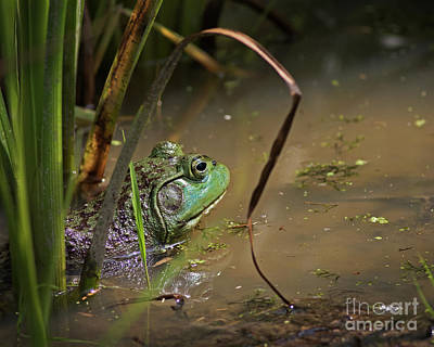 Photograph - A Frog Waits by James Guilford