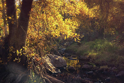 Photograph - A Golden Autumn Morning Creekside  by Saija Lehtonen