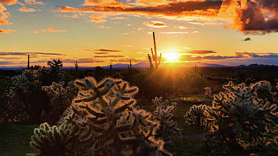 Photograph - A Golden Saguaro Sunset  by Saija Lehtonen