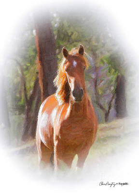 Pastel - A Horse by Chris Armytage