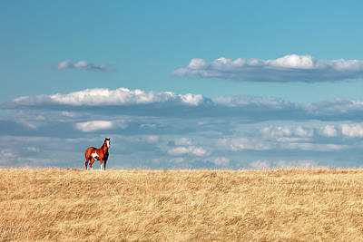 Photograph - A Horse With No Name by Todd Klassy