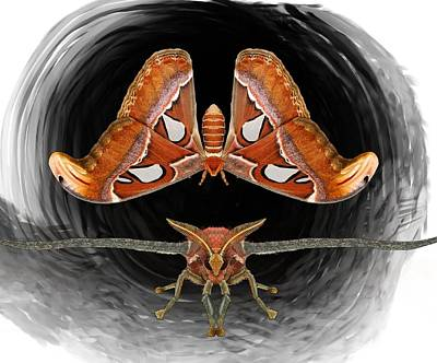 Child Wall Art - Digital Art - A Is For Atlas Moth by Joan Stratton