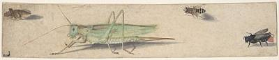 Animals Paintings - A Katydid, a Fly, a Bee, and a Fulgoroid Anonymous, Dutch, 17th century by MotionAge Designs