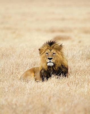 Plant Photograph - A Lion by Sean Russell