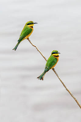 Photograph - A Little Bee Eater Couple by Kay Brewer