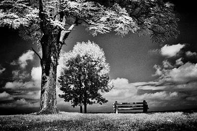 Photograph - A Lone Bench Under A Tree Under A Tree by Paul W Faust - Impressions of Light