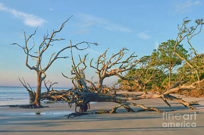 Photograph - A Look Down Driftwood Beach - Jekyll Island Georgia by Kerri Farley