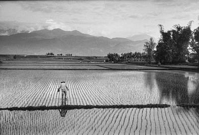 Photograph - A Man Working In Rice Paddies.  Photo B by John Dominis
