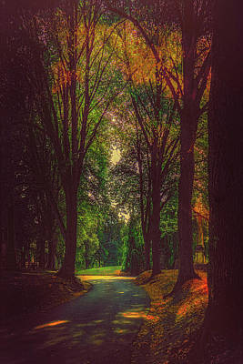 Photograph - A Moody Pathway by Chris Lord