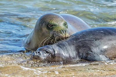 Photograph - Mama Monk Seal And Pup At The Shoreline, No. 1 - Rb00 And Pk1 by Belinda Greb