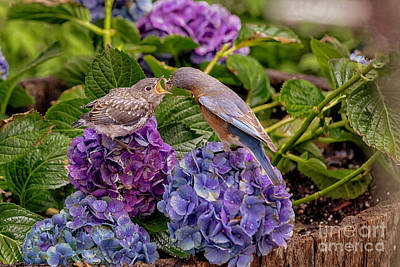 Photograph - A Mother's Care by David Harwood