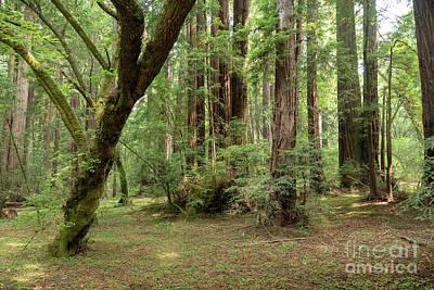 Photograph - A Muir Woods Moment by Sandra Bronstein