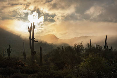 Photograph - A Mystic Morning In The Sonoran  by Saija Lehtonen