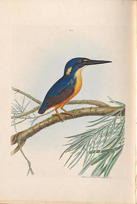 Modern Man Surf - A natural history of the birds of New South Wales by John William Lewin c 1822 - 17 by John William Lewin c