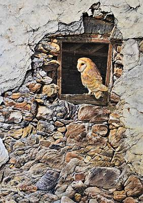 Painting - A New Home Barn Owl by Alan M Hunt