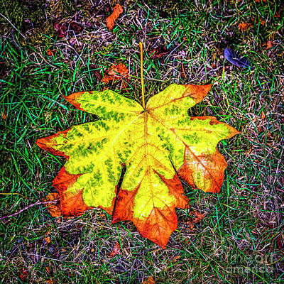 Photograph - A New Leaf by Jon Burch Photography