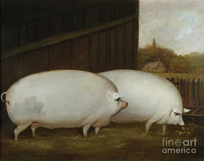 Painting - A Pair Of Pigs by English School