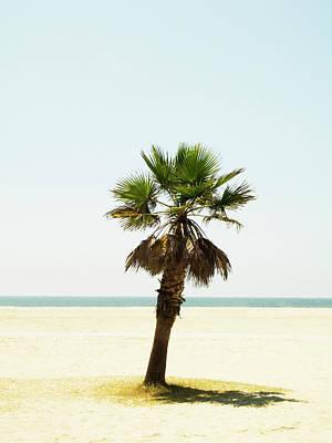 Photograph - A Palm Tree On A Beach Los Angeles Usa by Susanne Walstrom