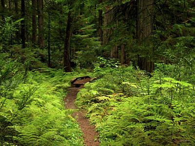 Photograph - A Peaceful Hike by Leland D Howard